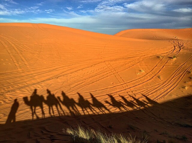 Camel train in the desert - selling sand to the Arabs